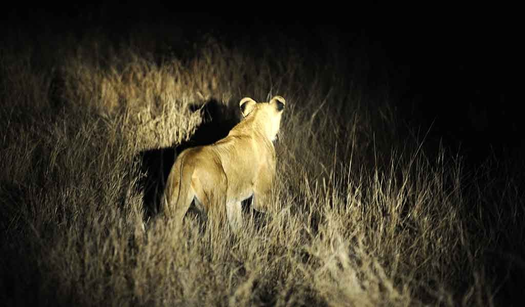 World Wildlife Day observed